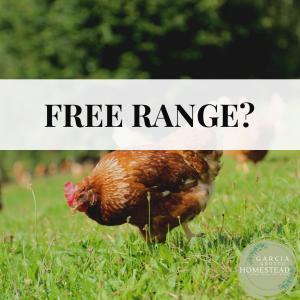raising chickens free range
