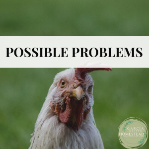 possible problems with chickens
